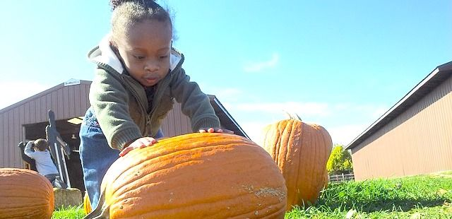 child pushing pumpkin on farm